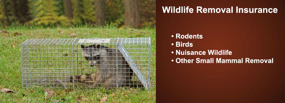 Nuisance Wildlife Removal Insurance