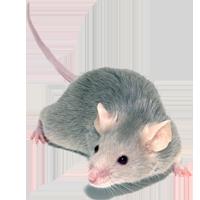 pest control insurance program